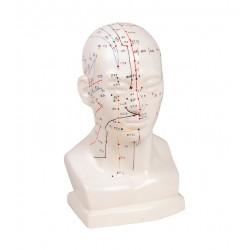 Čínská akupunkturní hlava