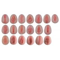 Porovnávací modely ženských genitálií
