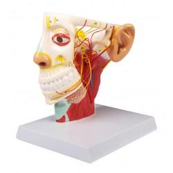 Trojklanný nerv