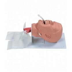 Model dýchacích cest dospělého člověka - základní verze