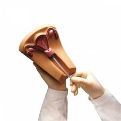 Simulátor pro zavádění nitroděložního tělíska