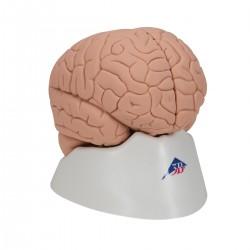 Model mozku ekonomický - 2 části