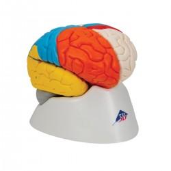 Model neuroanatomického mozku  - 8 částí