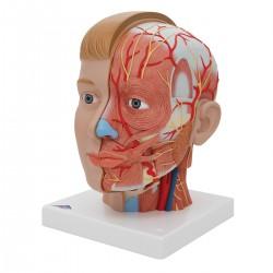 Luxusní hlava s krkem - 4 části