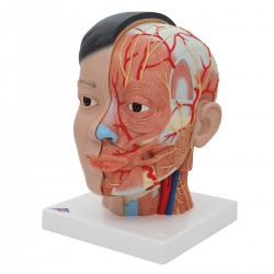 Luxusní hlava s krkem asijský typ - 4 části