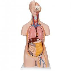 Klasické torzo těla s hlavou - 14 částí