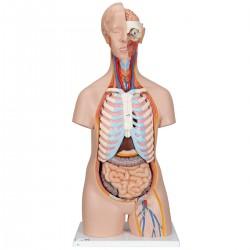 Klasické torzo těla s hlavou - 16 částí