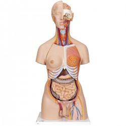 Luxusní torzo těla s hlavou, otevřeným krkem a zády - 28 částí