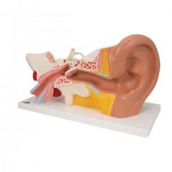 Ucho třikrát zvětšeno - 6 částí