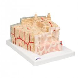 Struktura kosti 80 krát zvětšeno