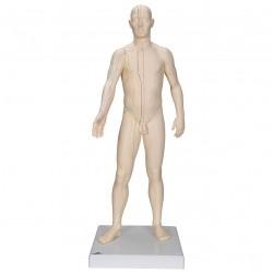 Model muže s akupunkturními body