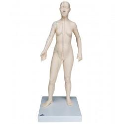 Model ženy s akupunkturními body