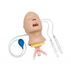 Model dýchacích cest - hlava dospělého Larry