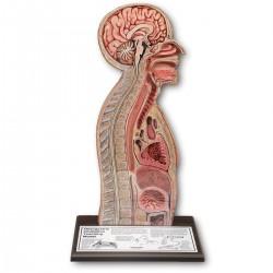 Simulátor k provádění nazogastrické intubace